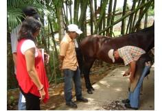 CAEQUINOS Corporación de Altos Estudios Equinos de Colombia Sabaneta Colombia