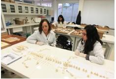Centro Universidad de los Andes - Facultad de Ciencias Sociales Cundinamarca